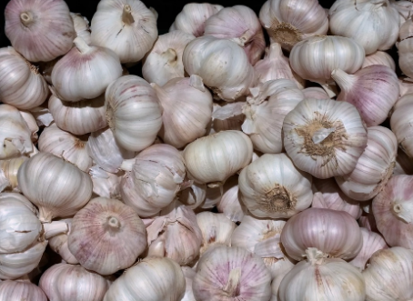 Garlic is an herb that is growing everywhere